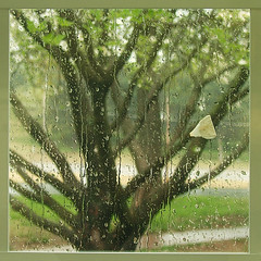 (rachel a. k.) Tags: glass rain dogwood 12x12 cwd rainonglass cwd143 cwdweek14
