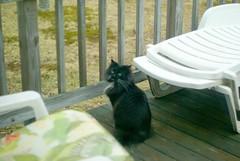 are you lookin at me?? (Balalalu) Tags: cats pets animals kitties