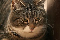 Keesa (zhakora) Tags: cats animals bestofcats boc0807