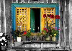 Window and Flowers (Sukanto Debnath) Tags: flowers india window yellow sony f828 sikkim pelling colorphotoaward flickrdiamond superhearts sukantodebnath