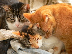 Cariitos  // Cuddles (Marianne Perdomo) Tags: cats gatos robyn trio magical peque susi susu bestofcats thebiggestgroupwithonlycats safe200