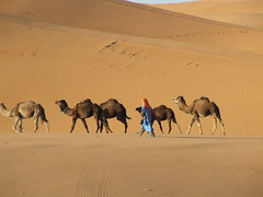 La vida... (Viento de poniente) Tags: africa fuji desert dune arena morocco maroc finepix desierto duna marruecos tuareg merzouga s5600 abigfave vientodeponiente