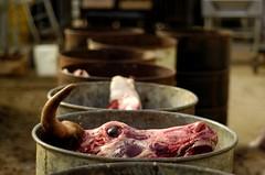 Beef (pjarrettphoto) Tags: flesh cow head beef meat