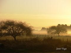 Niebla Matinal en Arauco (.Alejandro_Vega) Tags: morning autumn tree fall mañana fog sunrise arbol early bravo moody amanecer otoño niebla arauco temprano justhitmewithyourbestshotjune2008photoofthemonthcontestant
