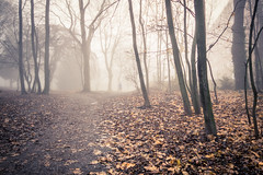 The runner vanishes / Le coureur disparaît... (Gilderic Photography) Tags: mist fog woods liege belgium belgique belgie gilderic canon g7x running runner