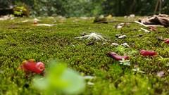 . (manu_chaux) Tags: moss flowers