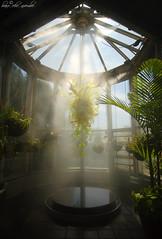 Chihuly Fog (Bravo_Kilo) Tags: atlanta plants mist green chihuly glass fog canon atlantabotanicalgardens canon1022mm