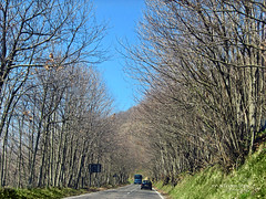 on the road. (*northern star) Tags: road blue trees sky cars alberi canon cielo azzurro viale northernstar donotsteal allrightsreserved northernstarandthewhiterabbit northernstar usewithoutpermissionisillegal northernstarphotography ifyouwannatakeitforpersonalusesnotcommercialusesjustask