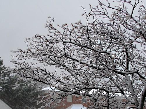April 11, 2007 snow III