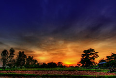 Surin sunset (grantthai) Tags: trees sunset sky landscape thailand interestingness village searchthebest explore hut thai frontpage ricepaddy surin peopleschoice may27 naturesfinest blueribbonwinner d80 flickrsbest 123sky utatafeature nikonstunninggallery colorphotoaward 100faves100comments1000views world100f