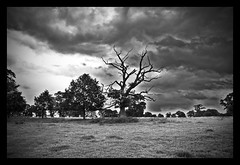 Trees / Arbres (A12Bxl) Tags: uk trees sky blackandwhite bw tree abandoned nature clouds dead countryside nikon estate noiretblanc cloudy empty himmel nb ciel arbres stourhead gb angleterre lonely d200 wiltshire nuages deserted verlassen blancinegre abandonn nuageux dsert anawesomeshot treesubject