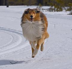 Leo running
