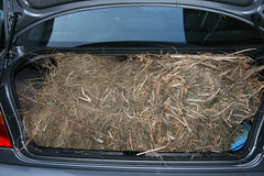 trunck full of hay