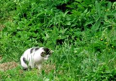 Chopper (Oliver Fist) Tags: green nature cat garden searchthebest poland krakow hunt krakoff kaszow kasb