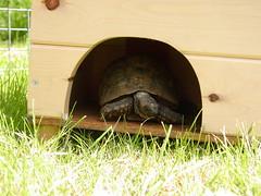 TortoiseBox2