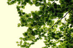 Et le ciel s'en va... (Mario 2R's) Tags: sky white green leaves shadows nikonstunninggallery abigfave fiveflickrfavs