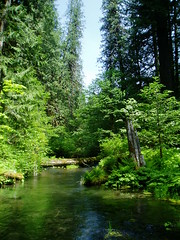 photo of a calm waterway near the McKenzie River