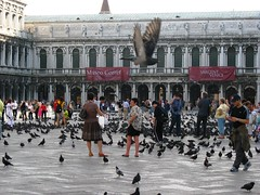 Flight @ Piazza San Marco