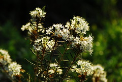 Growing in the forest (aixcracker) Tags: summer june juni suomi finland sommar kes keskuu nikond200 pernaja pern