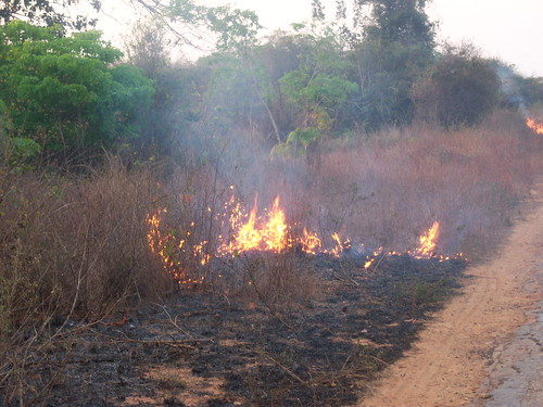 Road aflame: A common site in Mozambique. ph: Allan Schwarz