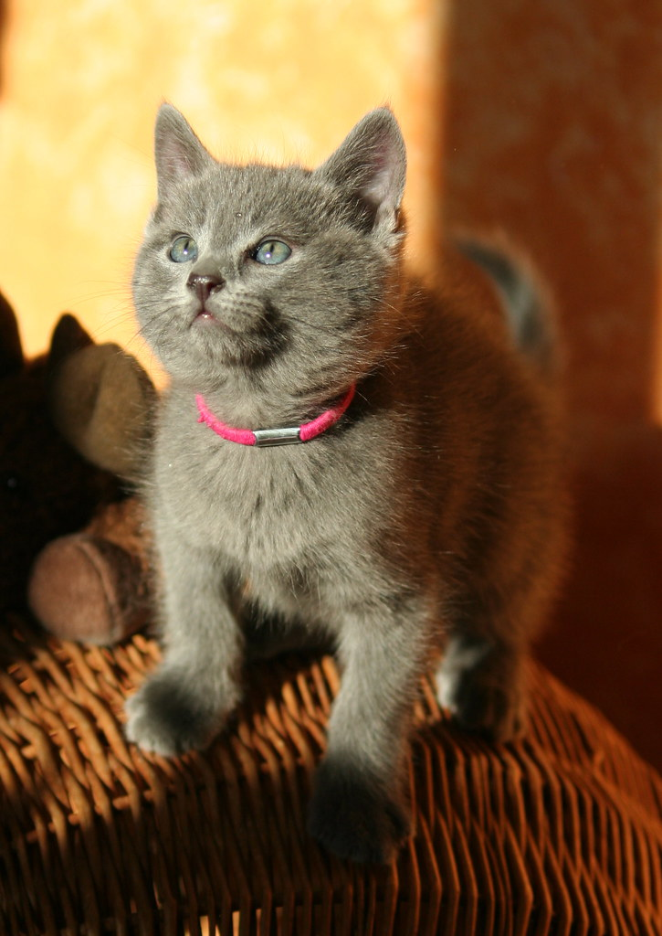 Kittens of Pegusha - Page 2 3264254824_6c1f53e36a_b