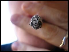 Assuefazione. (La_Babi) Tags: macro me cigarette sigaretta myfirstphotoonflickr