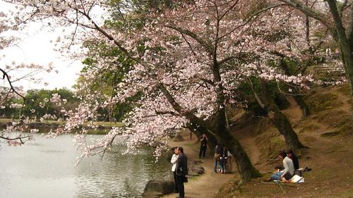 有兩個人在櫻花樹下野餐