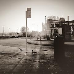 (_vanitY_) Tags: sunrise bravo belgium vanity antwerp antwerpen anvers linkeroever blueribbonwinner superaplus aplusphoto wwwsofieaudiffretcom