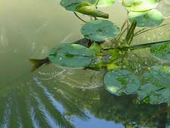 pez a la sombra