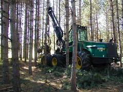 Cut-to-length harvester in red pine (esagor) Tags: red minnesota pine forest mechanical fb forestry timber row equipment thin harvesting thinning redpine loggingequipment forestmanagement minnesotawoods timberharvest
