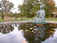 Aksobhya pond 1