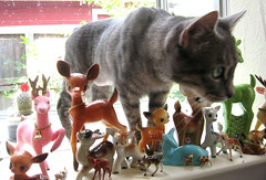 No Penny! (Katey Nicosia) Tags: window cat kitty deer collection