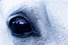 PB190214 (carla_schilling1) Tags: animal ccp farm horse
