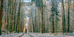 Nearby forest during winter. (stray_light_rays) Tags: winter woodland scenery scenics scene tranquil serene path road trees forestphotography forest woods outdoors nature beauty beautyinnature beautifullight landscape walking onepersononly majestic snow coldweather
