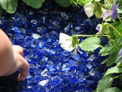 Blue glass as mulch