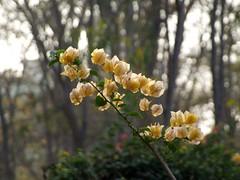 flowers (nik-pam) Tags: flowers india nature chhattisgarh