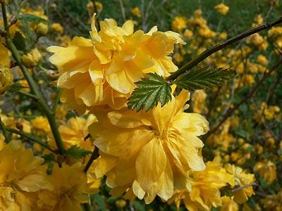 fleurs jaunes.jpg