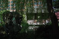 chineseGarden_ninga (Ninga) Tags: oregon garden portland or chinese classical chinesegarden portlandor portlandoregon rivera ninga classicalchinesegarden portlandclassicalchinesegarden schuck portlandchinesegarden kuyaninga janena janenaschuck janeannaschuck janeanna janenarivera janeannarivera