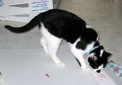 twinkle (bantryhill) Tags: friends cat kitten twinkle