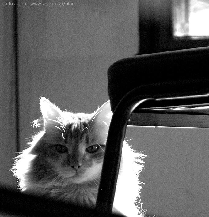 Theo , el gato con ojotas 521334522_d893c5843a_o