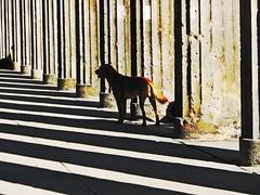 """""""The white stripes"""" - by Aguno"""