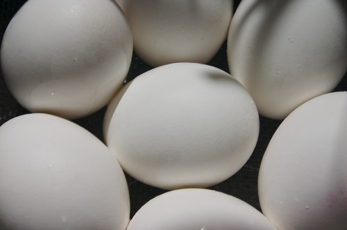 eggs up close