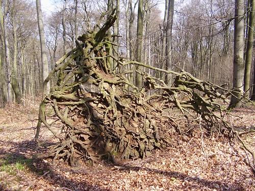 Wurzel - Roots