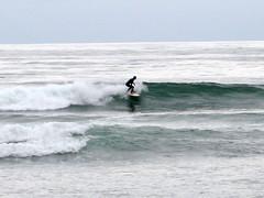 surfer 3 (Sophisticated Kitty) Tags: las gaviotas