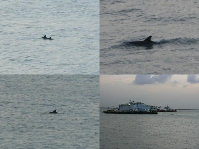 Delfines y barquitos