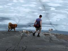 Jeremy and the dog entourage