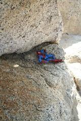 SPIDERMAN-1567-small