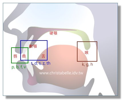 口腔剖面圖