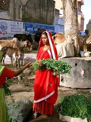 Market Moment (Chris Pryor) Tags: travel chris woman india asia market casio pushkar hindu sari rajastan pryor qvr40