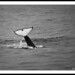 Killer Whale Again